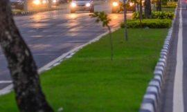 NA PANDEMIA: Prefeita fecha contrato de mais de 300 mil para compra de grama