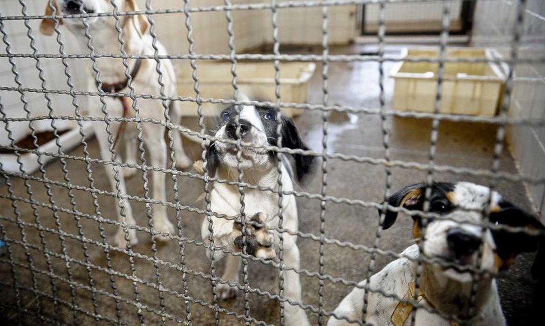 Prefeitura paga quase R$ 1 milhão para clínicas castrarem cães e gatos